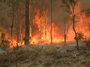 512px-Bush_fire_at_Captain_Creek_central_Queensland_Australia.